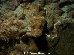 Flathead crocodile fish